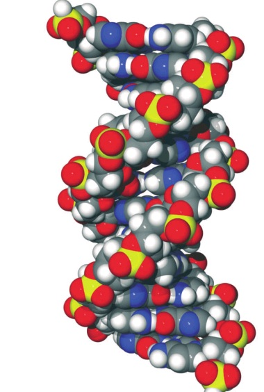 dna molecule anthropology iresearchnet